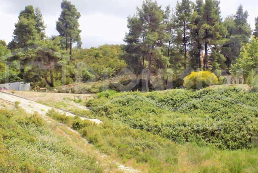 Paliouri856-10